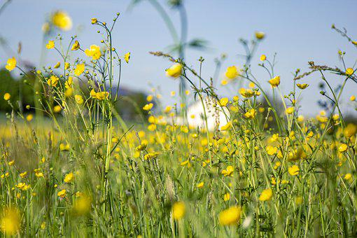 Flowers, Daisies, Field, Grass, Meadow, Plant, Glow