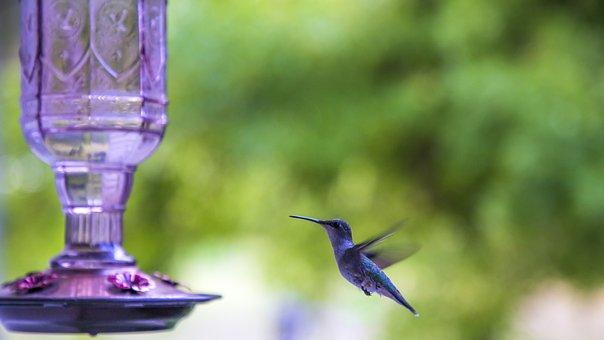 Hummingbird, Hummingbird Feeder, Bird, Small Bird