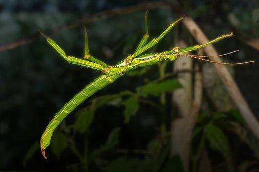 Tree, Leaves, Forest, Insect, Stick