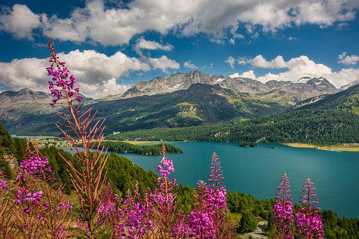 Lake, Flowers, Forest, Trees, Mountains, Alpine