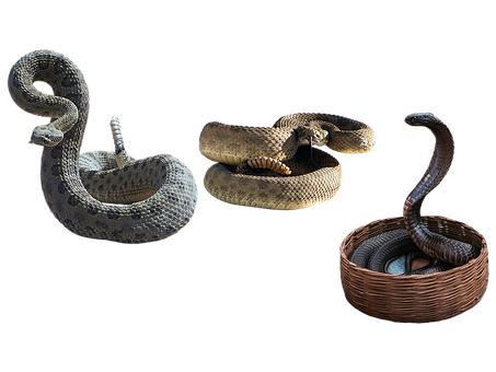 Snakes, Rattlesnakes, Reptiles, Scales, Venomous