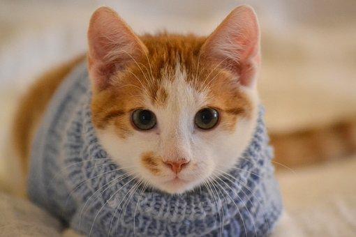 Cat, Kitten, Pet, Cute Cat, Adorable Cat, Small Cat