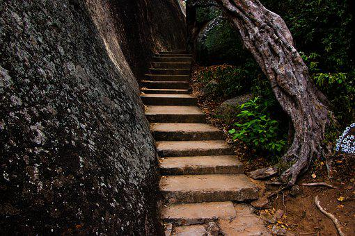 Stairs, Stairway, Forest, Steps, Path, Pathway