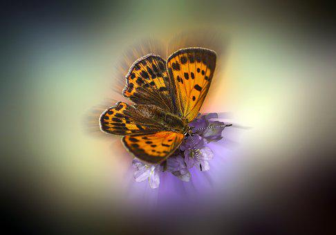 Butterfly, Insect, Wings, Antennae, Flower, Nature