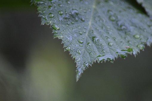 Leaf, Wet, Dew, Raindrops, Droplets, Plant, Closeup