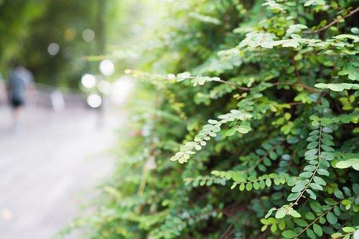 Plant, Leaves, Nature, Garden, Shrub, Greenery, Foliage