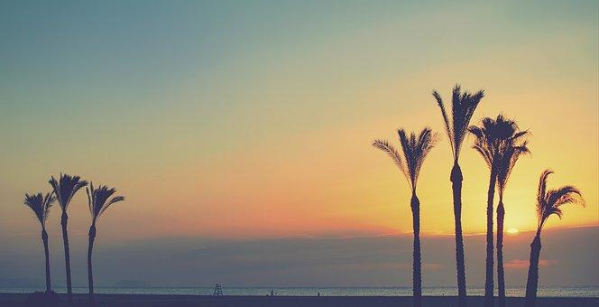 Trees, Palm Trees, Beach, Silhouette, Landscape