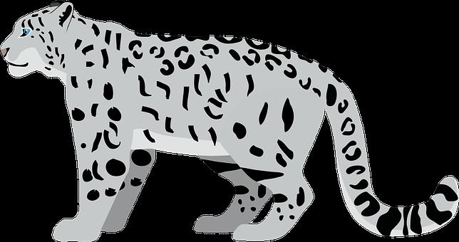 Snow Leopard, Leopard, Wildcat, Cat, Predator, Eyes