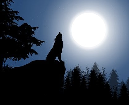 Moon, Wolf, Silhouette, Howling Wolf, Trees, Foliage