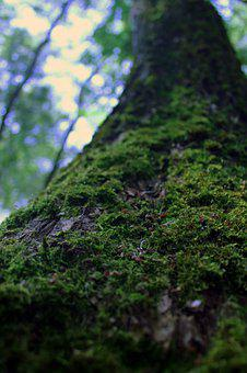 Moss, Tree, Forest, Nature, Wood, Trunk