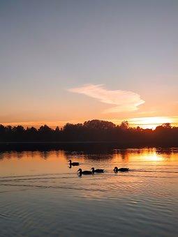 Ducks, Waterfowl, Sunset, Lake, Beaks, Dusk, Animals