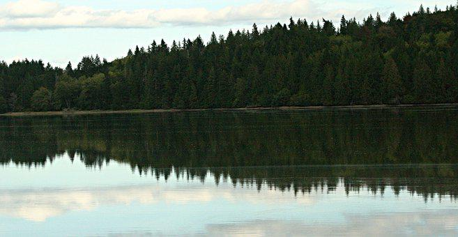Lake, Trees, Forest, Woods, Reflection, Mirroring
