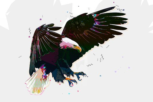 Bald Eagle, Eagle, Bird, Raptor, Bird Of Prey, Predator