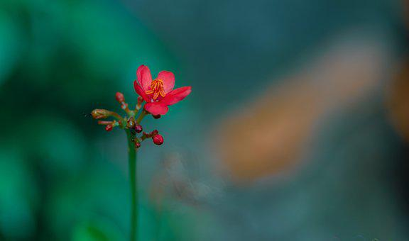 Macro Photography, Flower, Small Flower, Bloom, Blossom