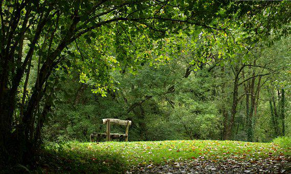 Bench, Clearing, Meadow, Forest, Park, Trees, Leaves