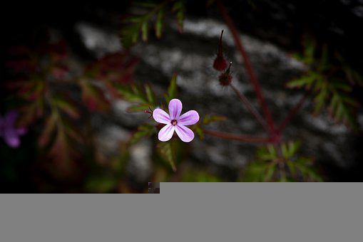 Flower, Blossom, Bloom, Pink Flower, Small Flower
