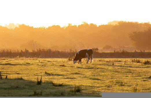 Landscape, Cow, Pasture, Grazing, Grass, Grassland