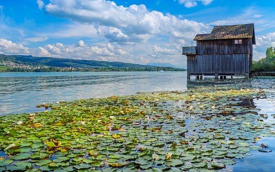 Lake, Lake Hallwil, Water Lilies, Lily Pads