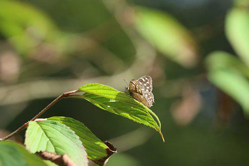 Butterfly, Insect, Leipdoptera, Entomology, Leaves