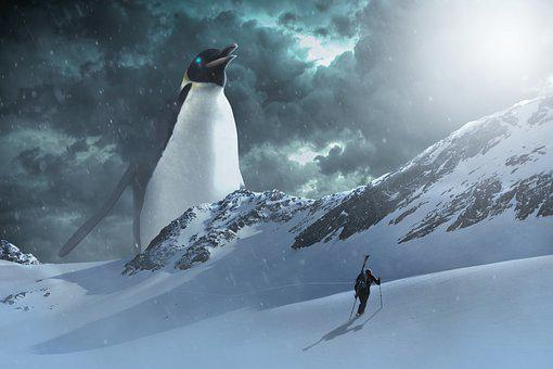 Penguin, Arctic, Antarctica, Animal, Cold, Winter, Ice