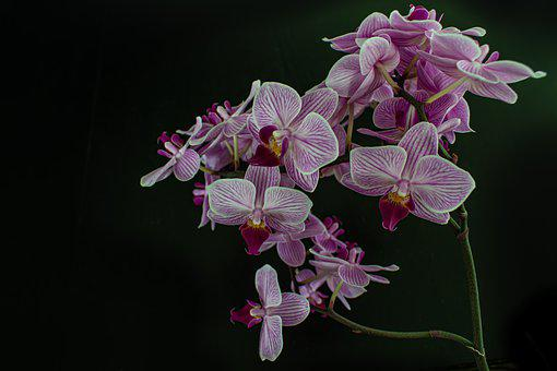 Orchids, Flowers, Blossom, Bloom, Nature, Plant