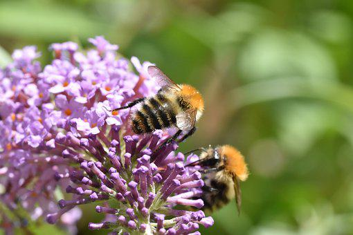 Pollination, Bees, Flowers, Pollinator, Insect