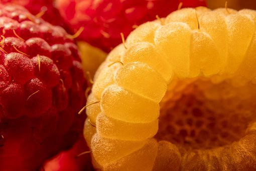 Raspberries, Yellow Raspberries, Red Raspberries