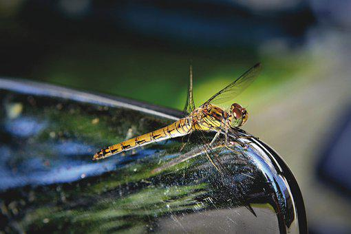 Dragonfly, Insect, Wings, Dragonfly Wings, Animal