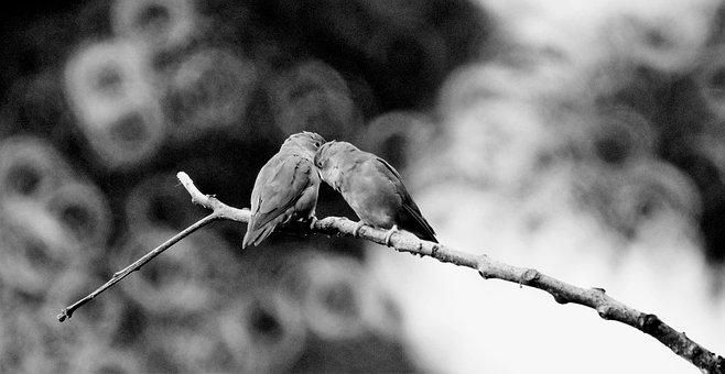 Black And White, Parakeets, Birds, Couple Birds