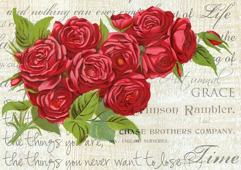 Vintage, Rose, Design, Floral, Love, Flowers, Roses