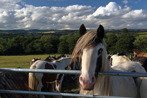 Horses, Paddock, Field, Equines, Fence, Ranch, Farm