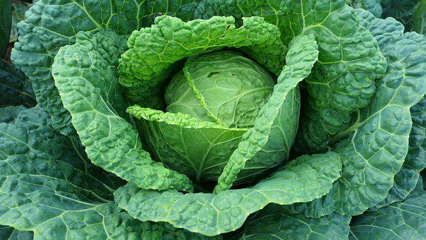 Cabbage, Green Leaves, Vegetables, Food, Foliage, Fresh