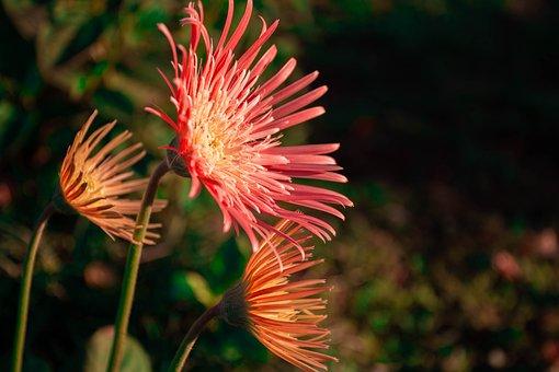 Flowers, Plants, Bloom, Blossom, Flora, Floriculture