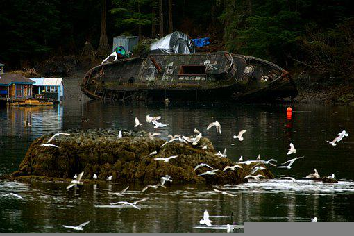 Shipwreck, Pollution, Seagulls, Alaska, Wreck