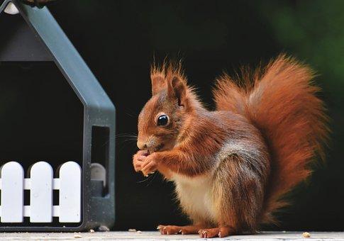 Squirrel, Verifiable Kitten, Squirrel Eating, Eating