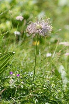 Flower, Stem, Grass, Weeds, Nature, Bloom