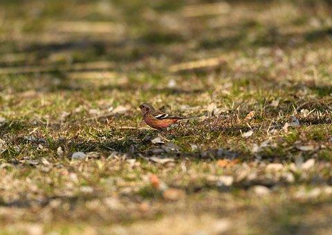 Bird, Beak, Bill, Feathers, Plumage, Sun, Meadow, Grass