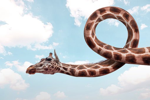 Giraffe, Twisted Giraffe, Fantasy, Twisted Neck, Animal