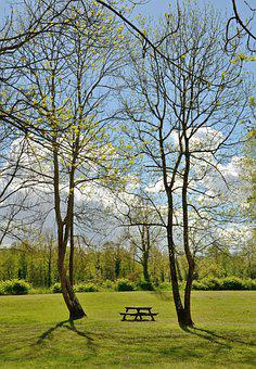 Meadow, Bench, Table, Trees, Air, Empty, Forest