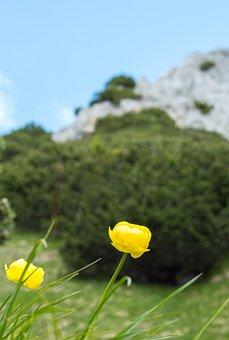 Mountain, Flowers, Petals, Grass, Meadow, Field, Hiking
