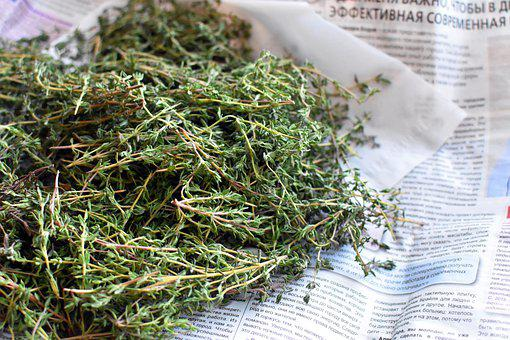 Thyme, Spice, Plant, Grass, Newspaper, Fresh