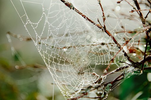 Spider Web, Fog, Wet, Drops, Morning, Nature