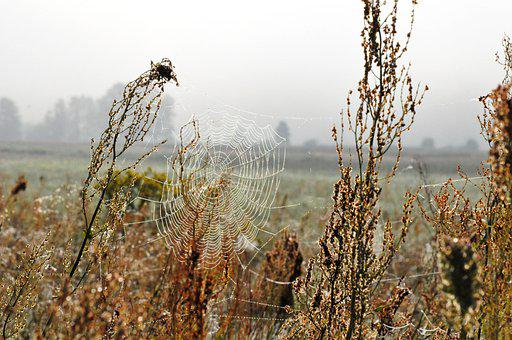 Cobweb, Spider Web, Meadow, Plants, Botany