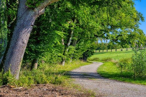 Trail, Path, Road, Trees, Fields, Farm, Rural