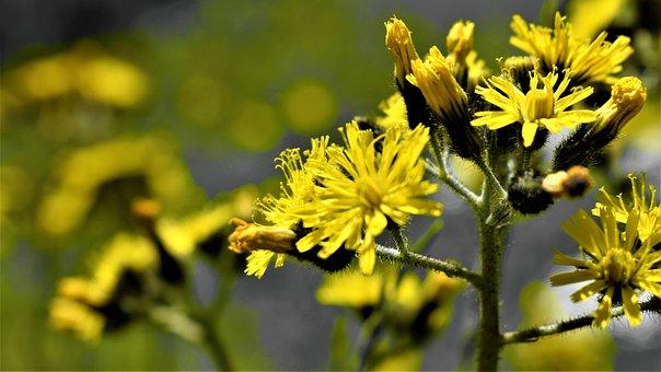 Flowers, Petals, Stems, Buds, Flora, Floral, Botany