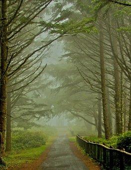Path, Trail, Trees, Woods, Fog, Nature, Landscape