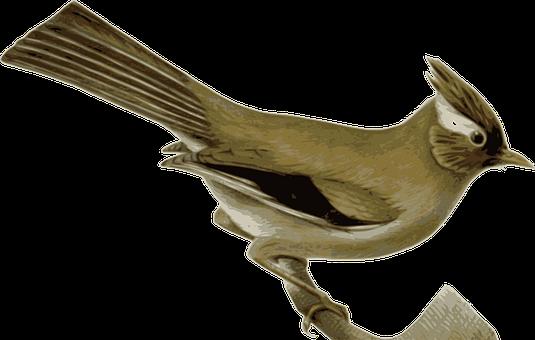 Bird, Animal, Sitting, Tail Festhers, Brown