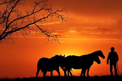 Sunset, Horses, Silhouette, Animals, Equines, Man