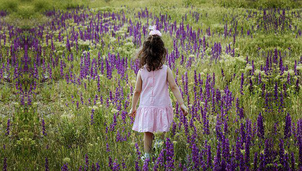 Child, Little Girl, Lavender Field, Baby, Toddler