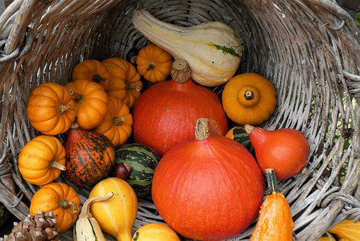 Pumpkins, Squash, Basket, Basket Of Pumpkins, Produce
